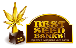 Best Seed Banks